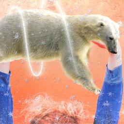 freetoedit polarbear trophy animallove celebration