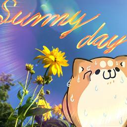 freetoedit dog sunnday love summer