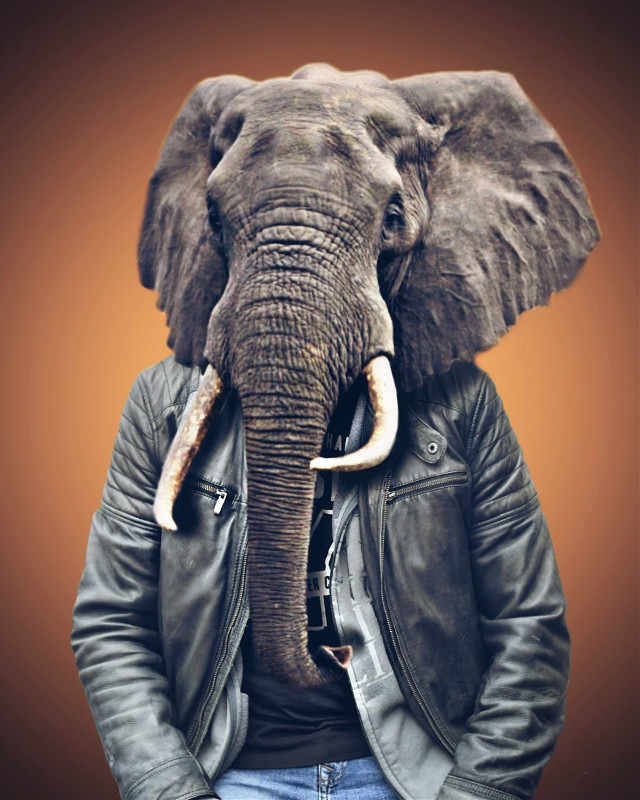 Just my friend and a elephant 😃 5/5 #madewithpicsart #picsart @picsart #picsartvip #draw #drawtools #edited #editstepbystep #editedbyme