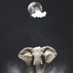 elephant rainy night moon