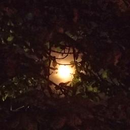 moon autumn november2017 egphotography throughtheleaves goodnight freetoedit