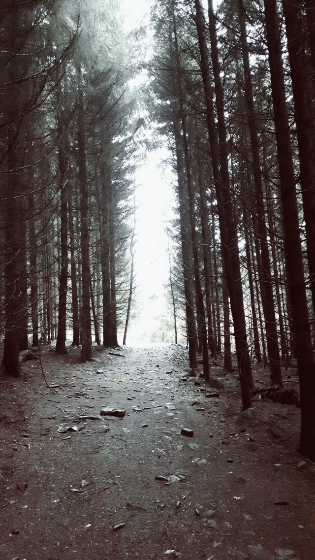 #awalkinthewoods a cold and dark morning in the woods