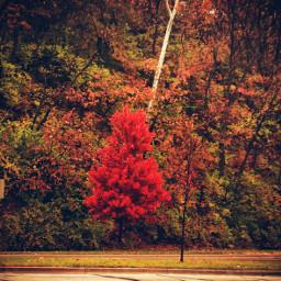 fall autumn nature leaves leavesfall