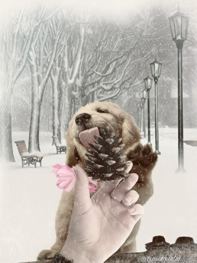 #pineconeremix #dog #cute #editedbyme