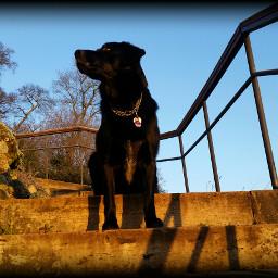 apollo mypets dog morningsun coldmorning