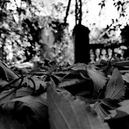 otoño autumn oto