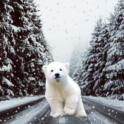 freetoedit surreal polar bear road