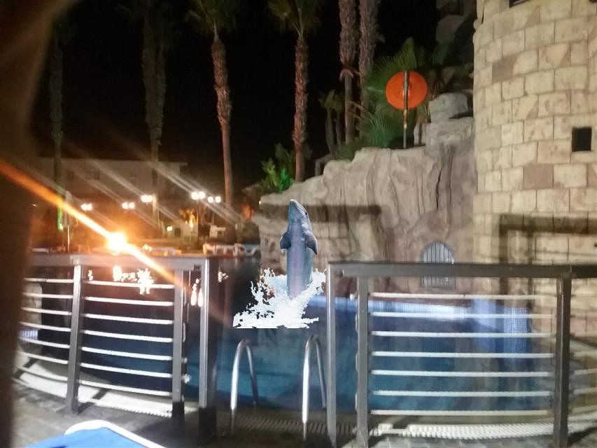 #dolphinarium