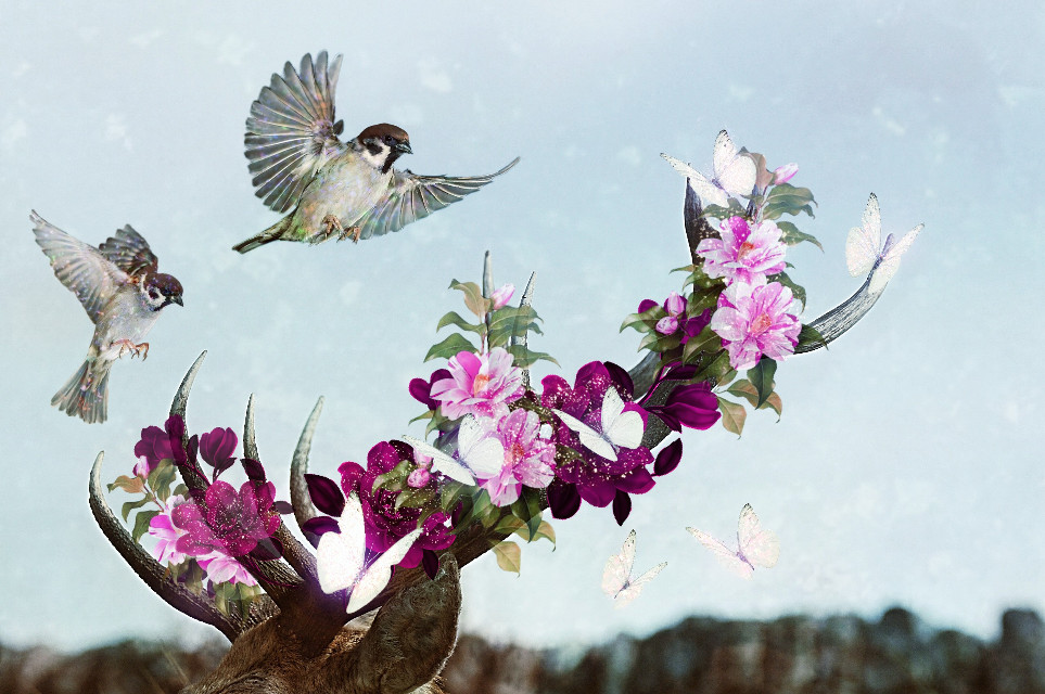 #myremixedit#deer#birds#flowers#bitterfly