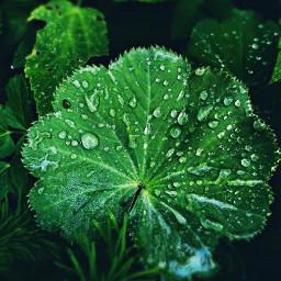 vibranteffect leaf waterdrops macro freetoedit