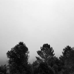 freetoedit pcbadweather badweather darkart trees
