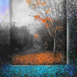 freetoedit blackandwhite coloursplash winterbreak autumnleaves