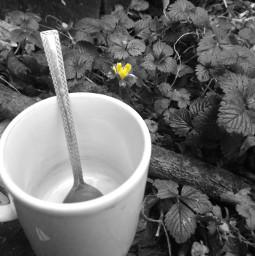 blackandwhite colorsplash everydaylife coffeemug mygarden