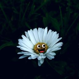 daisy googlyeyes freetoedit googlyeyesstickerremix