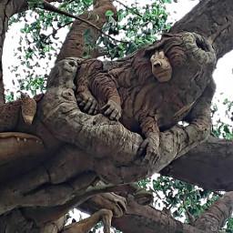 pcshootingupwards myphotography treeoflife carving animalkingdom