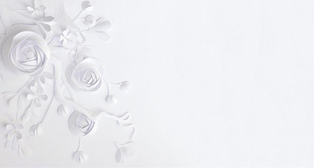 Flower Canvas White Background Vector 4k Hd Wallpaper