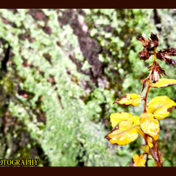 plant depthoffield moss photography nature