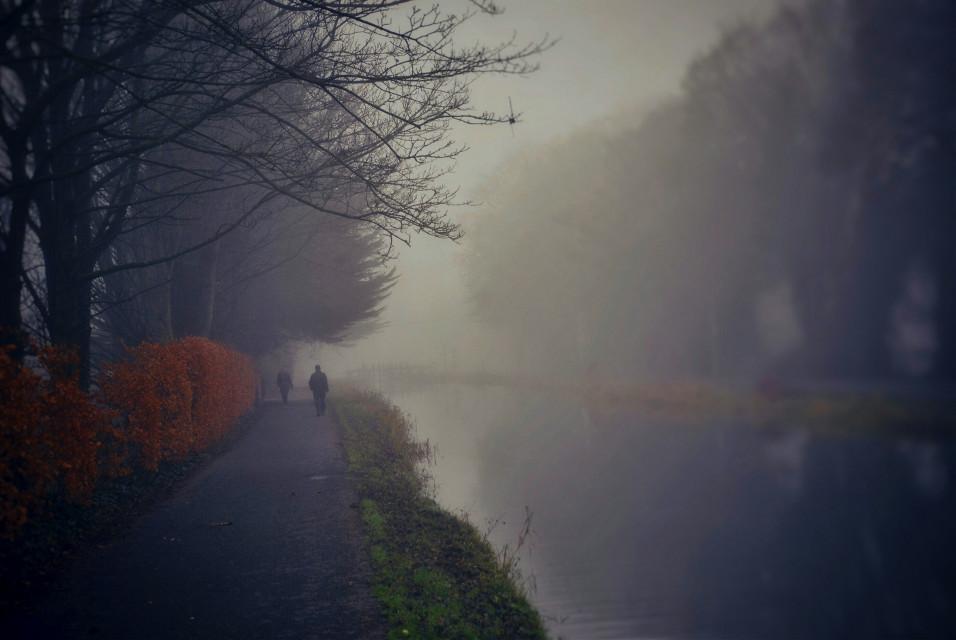 Foggy morning  #fog #foggymorning  #foggyday #foggyview #foggyweather #foggyriver