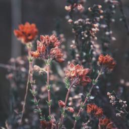 freetoedit flowers 2018 floweroftheday winter