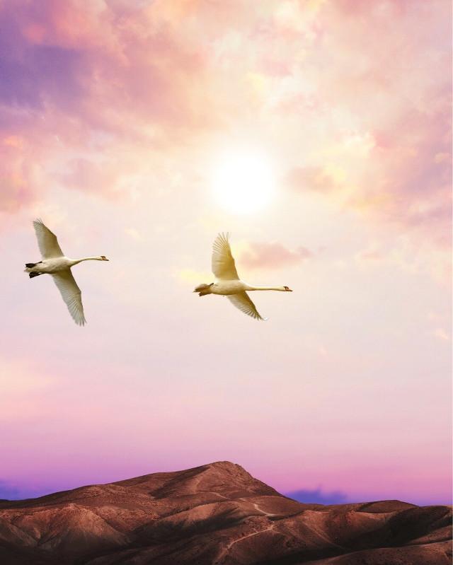 #nature #birds #surreal #surrealism #pa #picsart #fly #sky #sun
