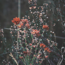 freetoedit flower winter winterwonderland flowrencia