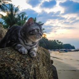 freetoedit cats photography