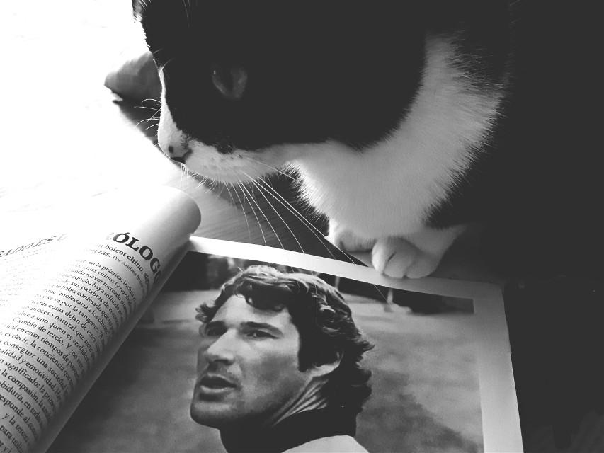 Chica #blackandwhite #catsofpicsart #moments #cats #mypet