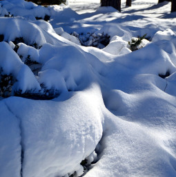 winter wintertime snow snowscape coldoutside