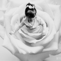 rose girl ballerina blackandwhite freetoedit