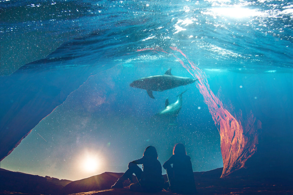 #freetoedit  #whale #water #sunset #remixit