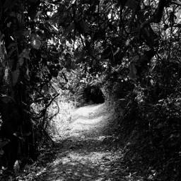 mobilephotography nature jungletracking black