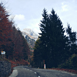 photography nature travel road tree