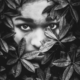 face leaves hidden plants tree freetoedit