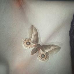 skin foco butterfly edit freetoedit