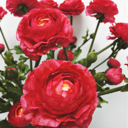 red myoriginalphoto flowers brightcolor pcflowers