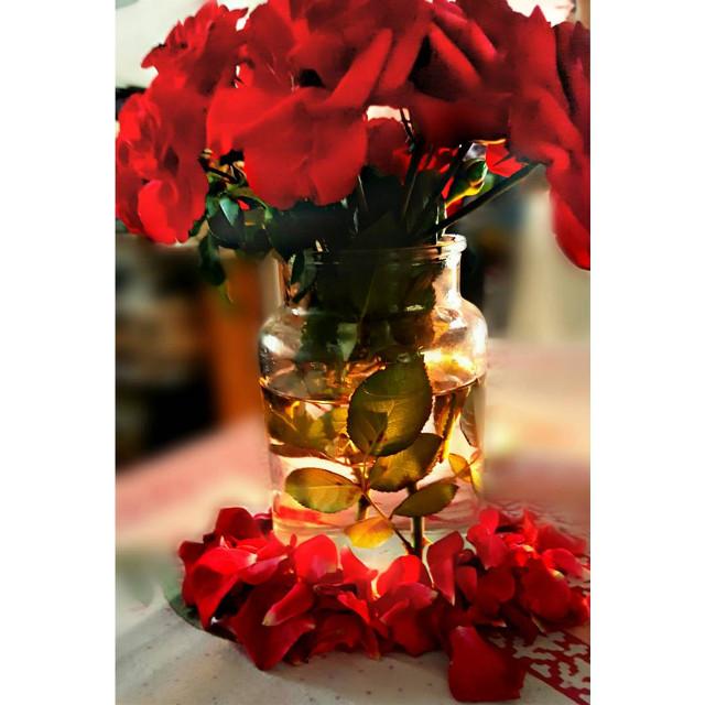 He that dares not to grasp the thorn, should never crave the rose.🌹🌹🌹  #freetoedit  #flashesofdelight #flowermagic #rosesarebeautiful #flower #red #flowerslovers #flowerarrangement #flowerart