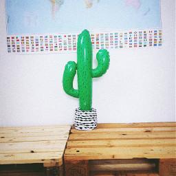 freetoedit editit colors cactus lifestyle