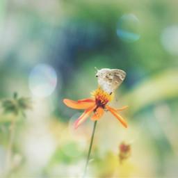 nature flower butterfly beautiful photographynature pcgoldenyellow