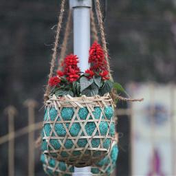 freetoedit flower flowerpot hanging rope