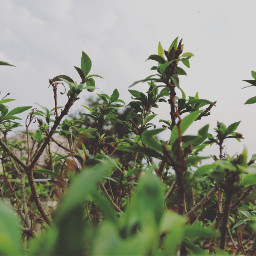 freetoedit plant love
