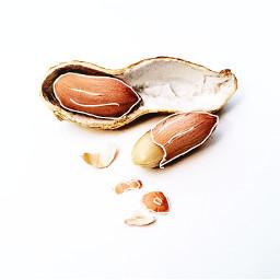 freetoedit picsart almond nature drawing