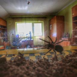 spider room