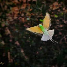 photography birds nature