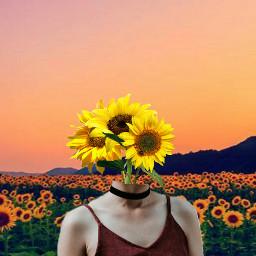 freetoedit girassol🌻 girasol flor flores