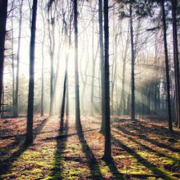 freetoedit nature naturephotography forest forestwalk
