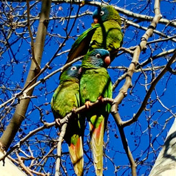 photography sky tree bird parrot freetoedit