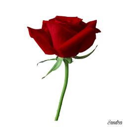 freetoedit womensday truelove love rose