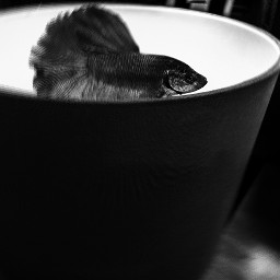 surrealisticanimal surrealisticphoto surrealistic blackandwhite movement