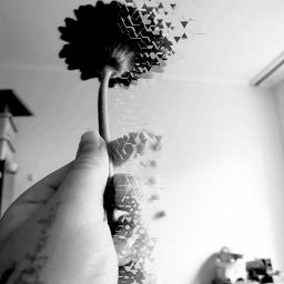 flower grey black dispersion