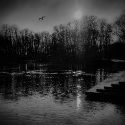 blackandwhite water trees bird photoshot